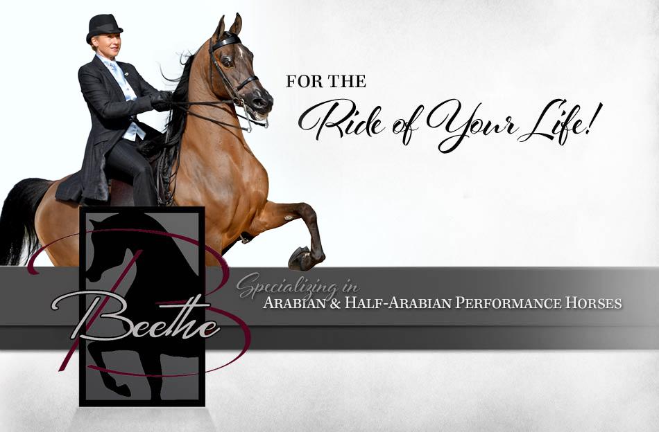 Beethe Arabians | Noble Supreme